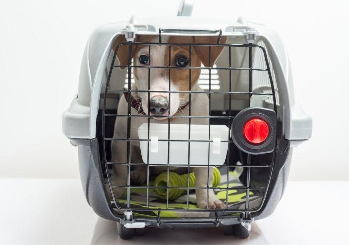 Evcil Hayvan Taşıma Tedbirleri